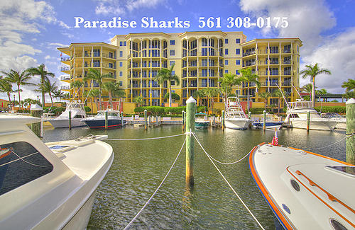 Paradise Sharks YC