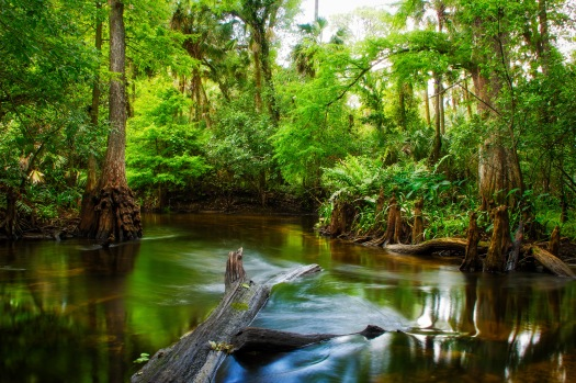 Loxahatchee River Backwaters from Jupiter Florida