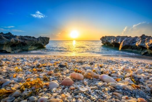 Seashells at Coral Cove Beach Park During Sunrise Tequesta Flori
