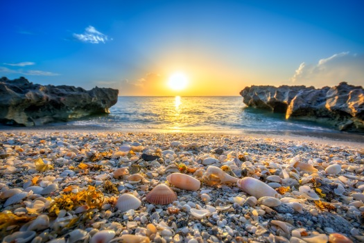 Seashells at Coral Cove Beach Park During Sunrise Tequesta Flori