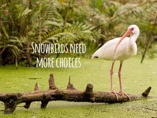 Blog PHOTO BIRDS