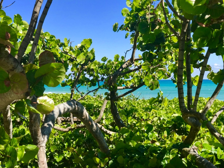 View at Paradise Sharks Beach Crossover