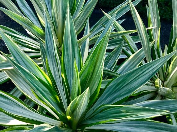 Cool plant